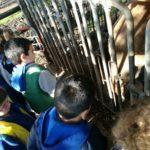 fattoria-scuola-beata-rosa-venerini-ariccia